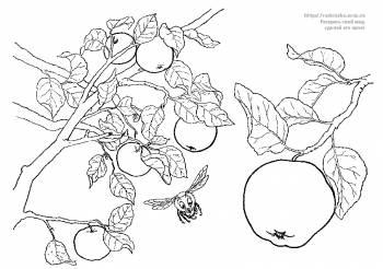 Раскраски овощи, фрукты, ягоды - Детские раскраски ...