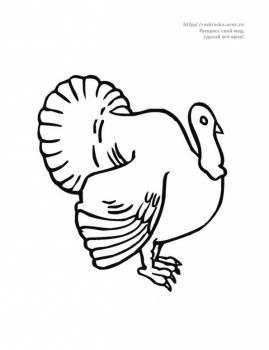 животные насекомые птицы детские раскраски раскрась