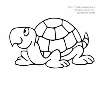 Раскраска черепаха - 30 Декабря 2009 - Детские раскраски ...