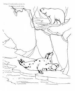 Раскраска тюлени и белый медведь
