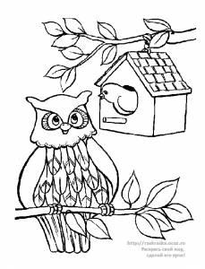 Раскраска сова сидит на ветке - 18 Мая 2010 - Детские ...
