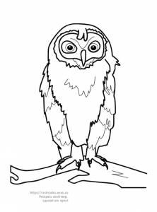Раскраска сова сидящая на ветке - 30 Апреля 2010 - Детские ...