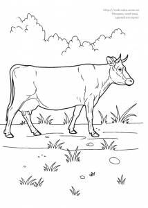 Раскраска корова на лугу - 15 Июня 2010 - Детские ...
