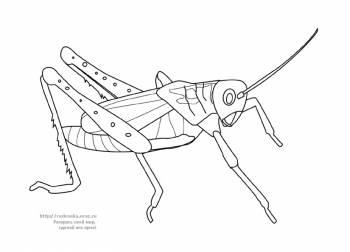 Категория животные насекомые птицы