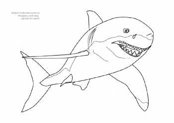 Раскраска акула - 16 Ноября 2010 - Детские раскраски ...